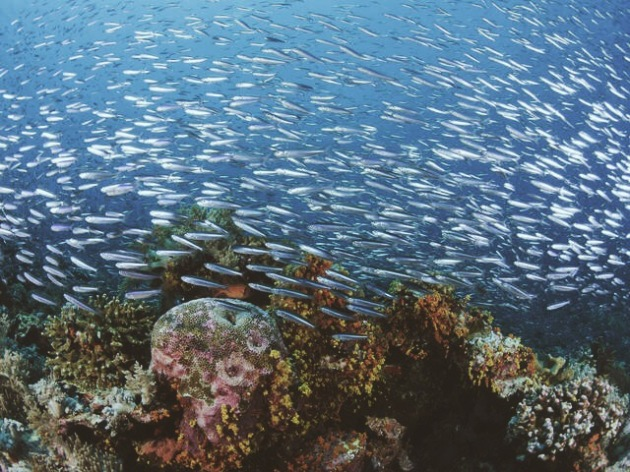 A Healthy Reef in Indonesia